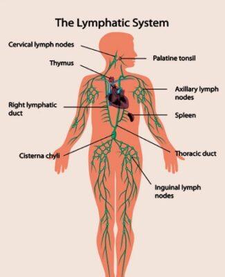 ทำความรู้จักโรคมะเร็งต่อมน้ำเหลือง (Lymphoma)